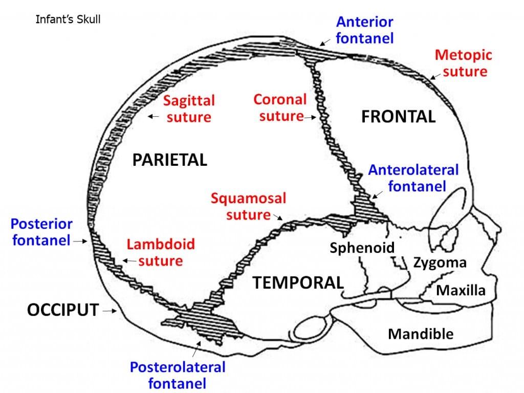Illustration1.skull